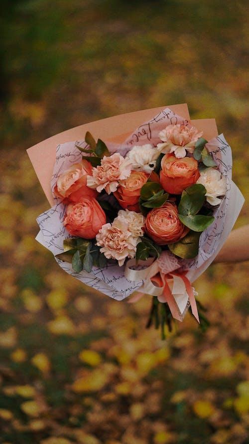 Imagine de stoc gratuită din buchet, floare, flori