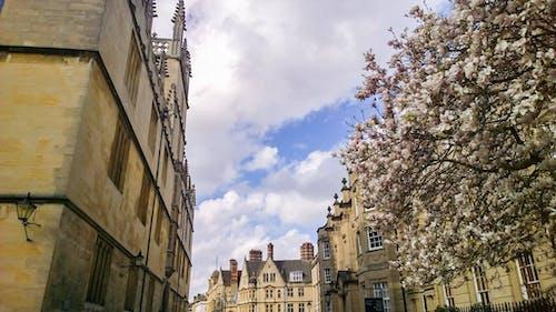 vitnage, 倫敦, 大學, 春天 的 免費圖庫相片