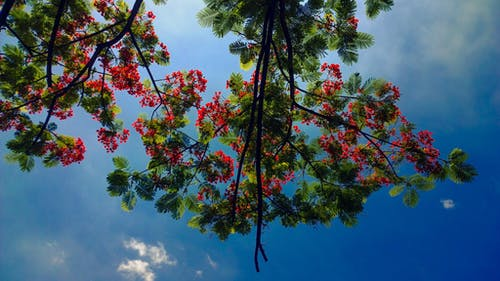 Photos gratuites de arbres, Asiatique, asie, ensoleillé