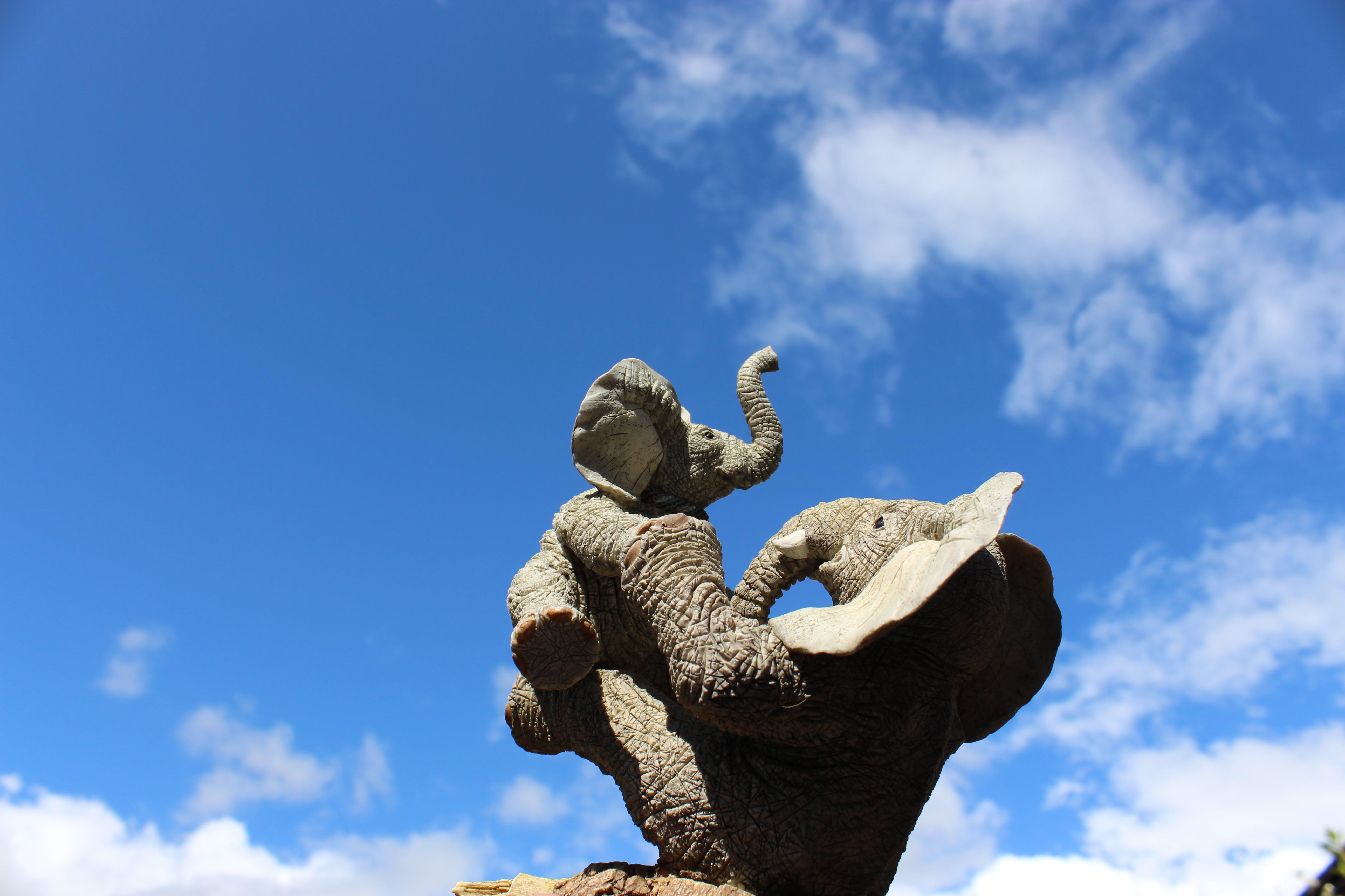 Free stock photo of african elephant, animal, baby elephant, blue sky