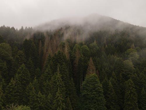 Fotos de stock gratuitas de al aire libre, bosque, con niebla