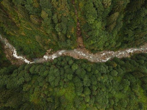 Fotos de stock gratuitas de corriente de rió, foto aérea, fotografía de naturaleza