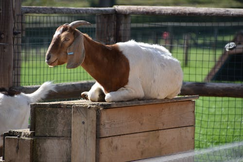 White and Brown Horse on Brown Wooden Cage