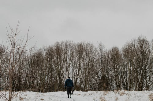 下雪, 冬季, 冷, 冷冰冰 的 免费素材照片