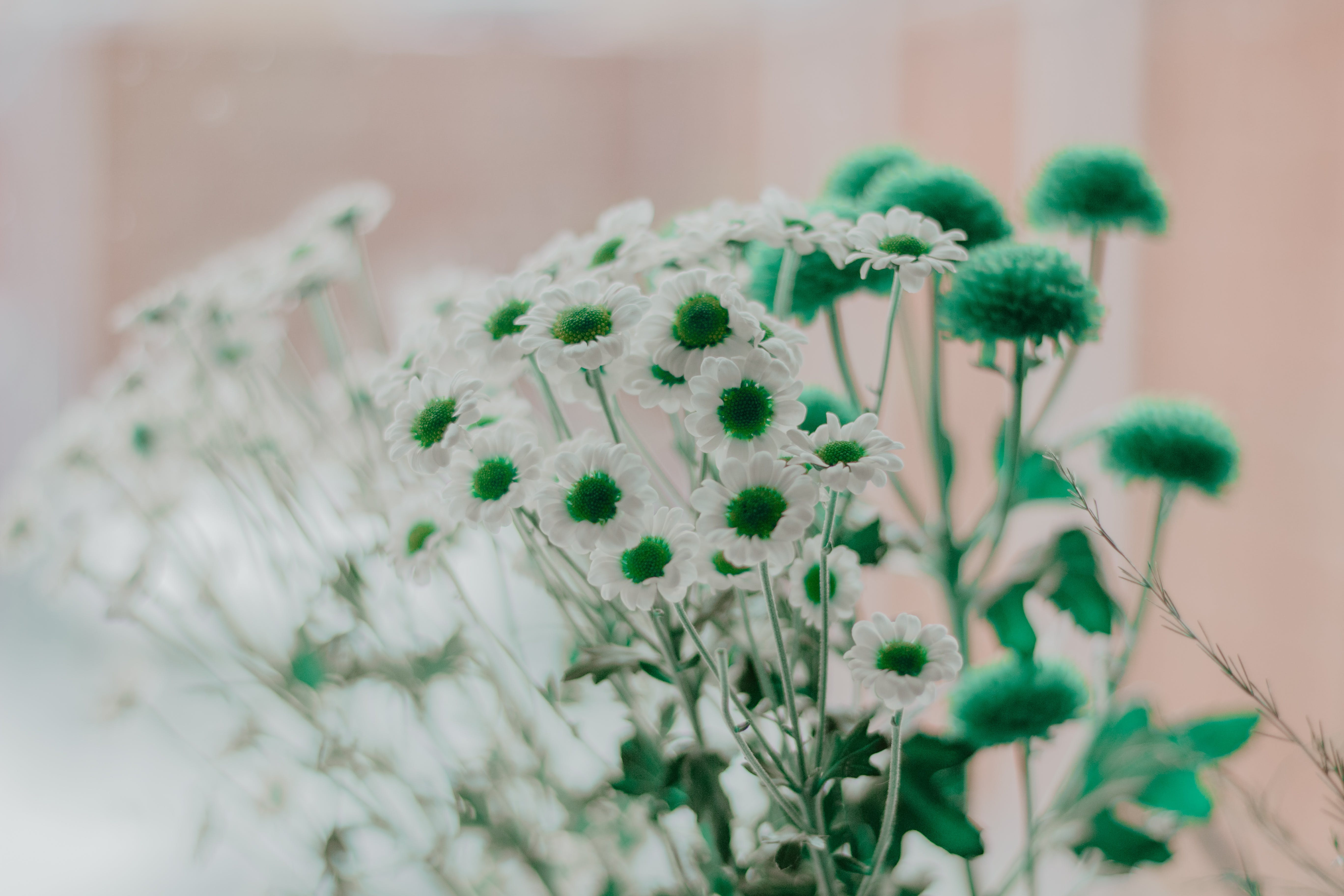 Selective Focus Photography of Green and White Petaled Flowers