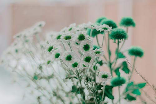 明亮, 植物群, 模糊的背景, 綻放的花朵 的 免费素材照片