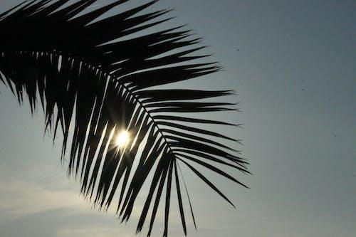 Immagine gratuita di chiarore del sole, cielo, foglie di palma, palma