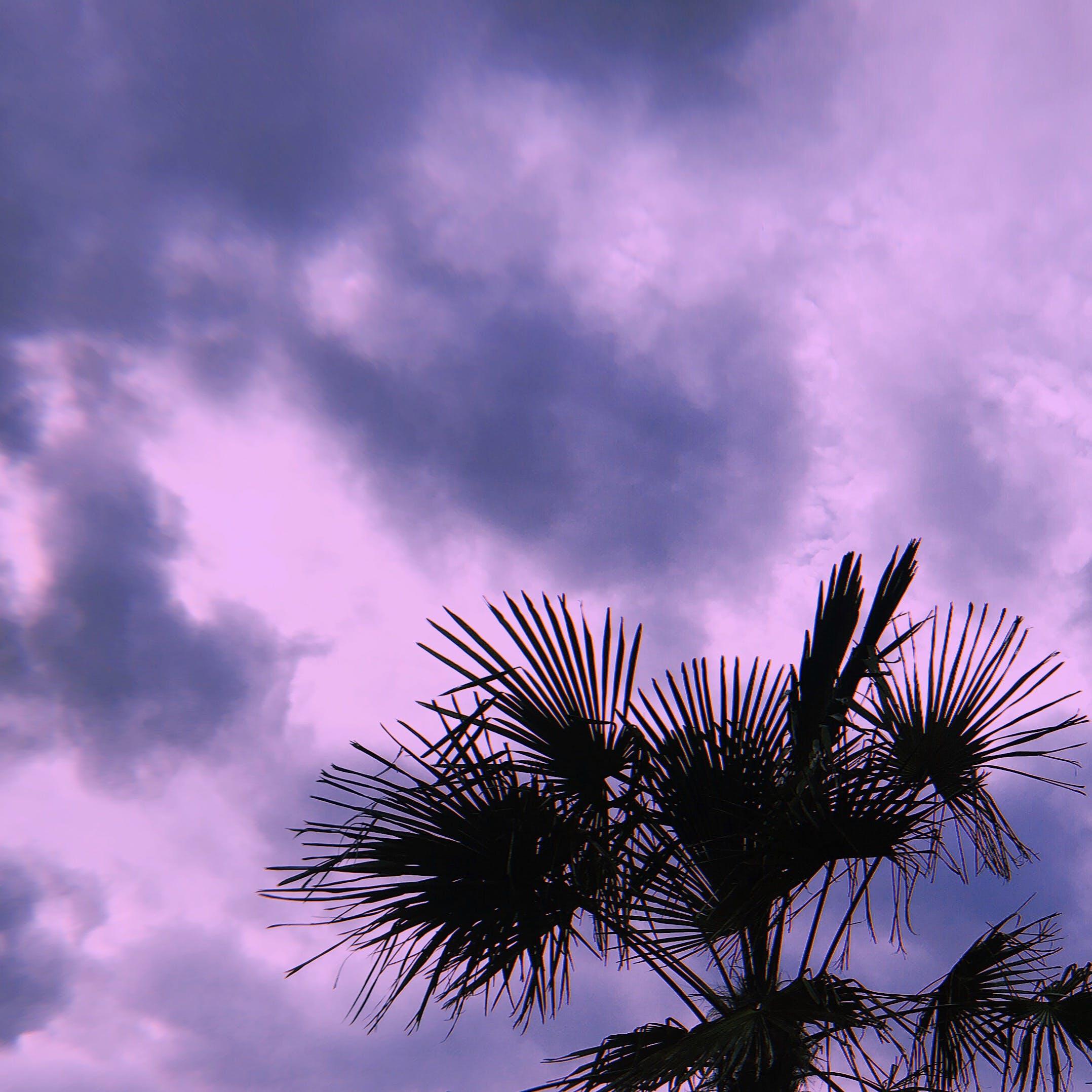 Free stock photo of color, dramatic sky, minimal, palm tree