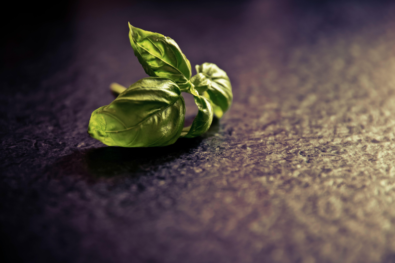 Green Leaf on Black Ground