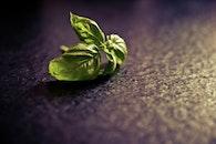 green, ingredient, basil