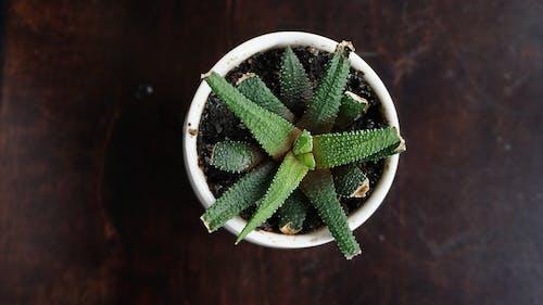 Foto d'estoc gratuïta de amor, cafeteria, plantes, suculenta