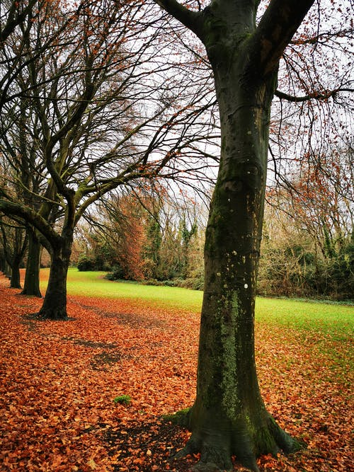 Free stock photo of autumn, autumn colours, colourful