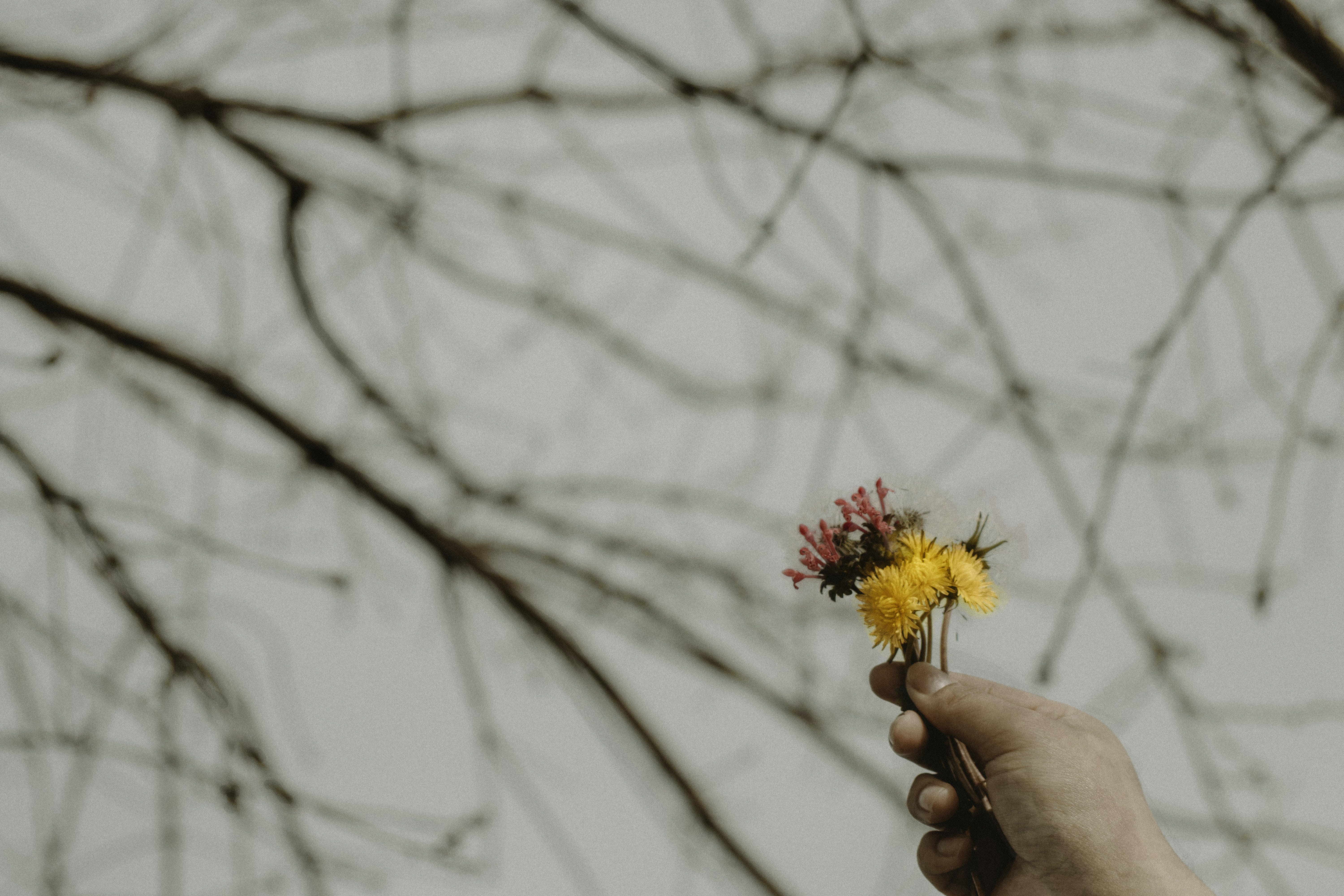 Free stock photo of fall, flower, hand, hold