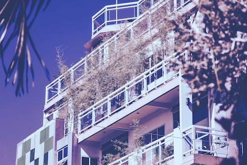건축, 높은, 도시의, 로앵글 촬영의 무료 스톡 사진
