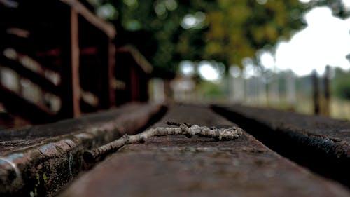 Darmowe zdjęcie z galerii z drewno, drzewo, gałązki, krajobraz