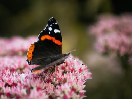 Gratis lagerfoto af blad, blomst, dagslys