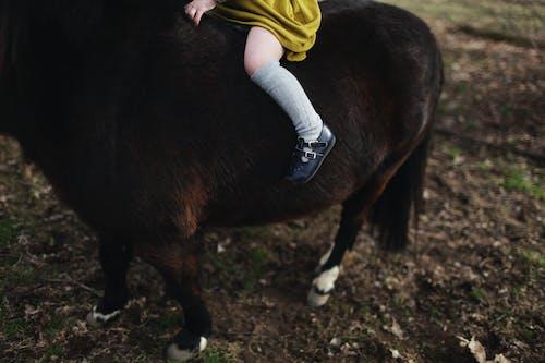 Fotos de stock gratuitas de caballo miniatura, chica montando, chica montando a caballo, granja