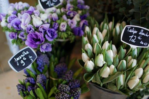 Gratis stockfoto met aantrekkelijk mooi, aromatisch, bloeien