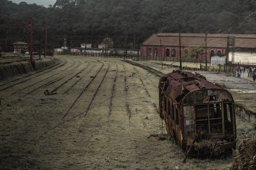Foto d'estoc gratuïta de abandonat, acer, arbres