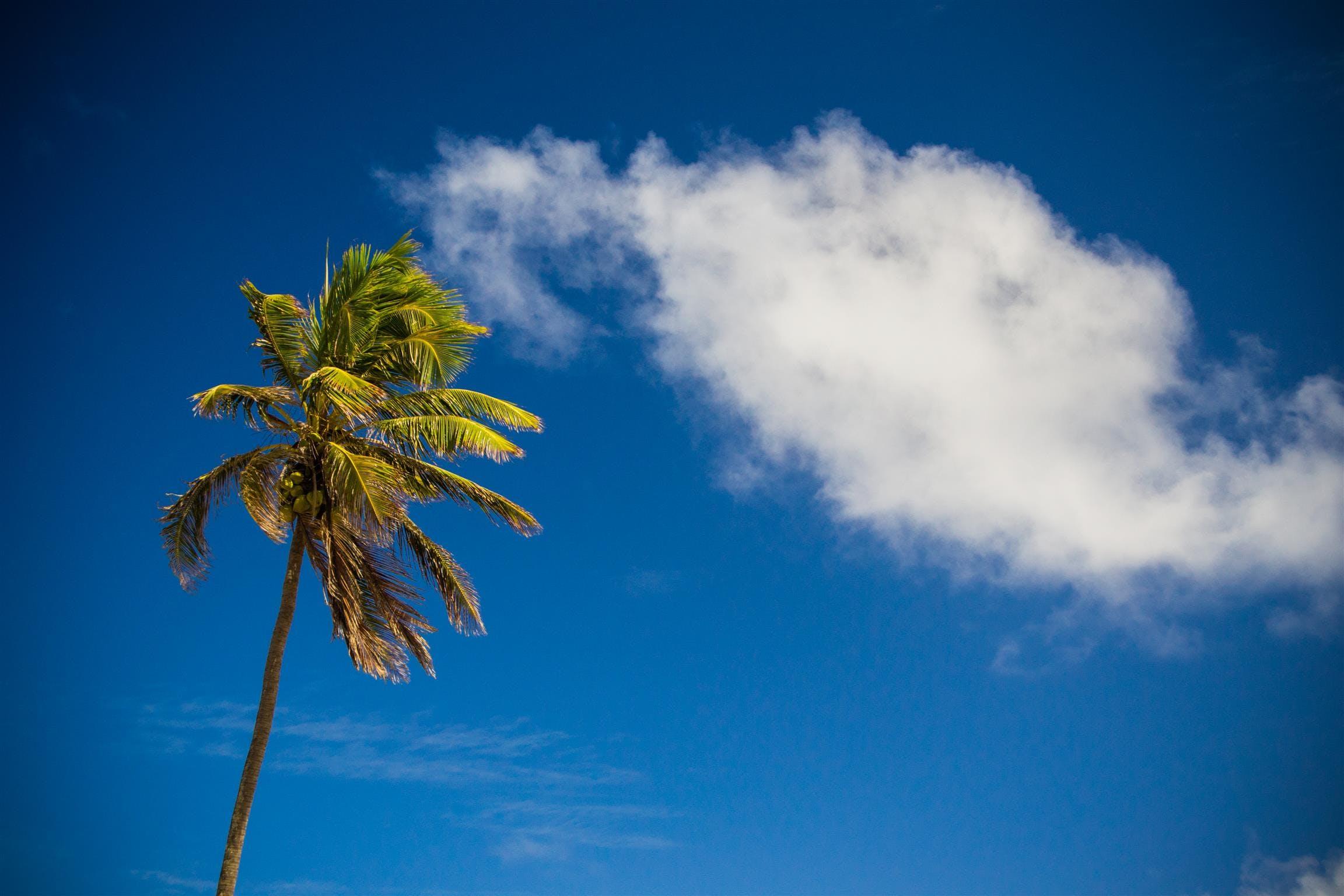 Palm Tree Under Cloudy Sky