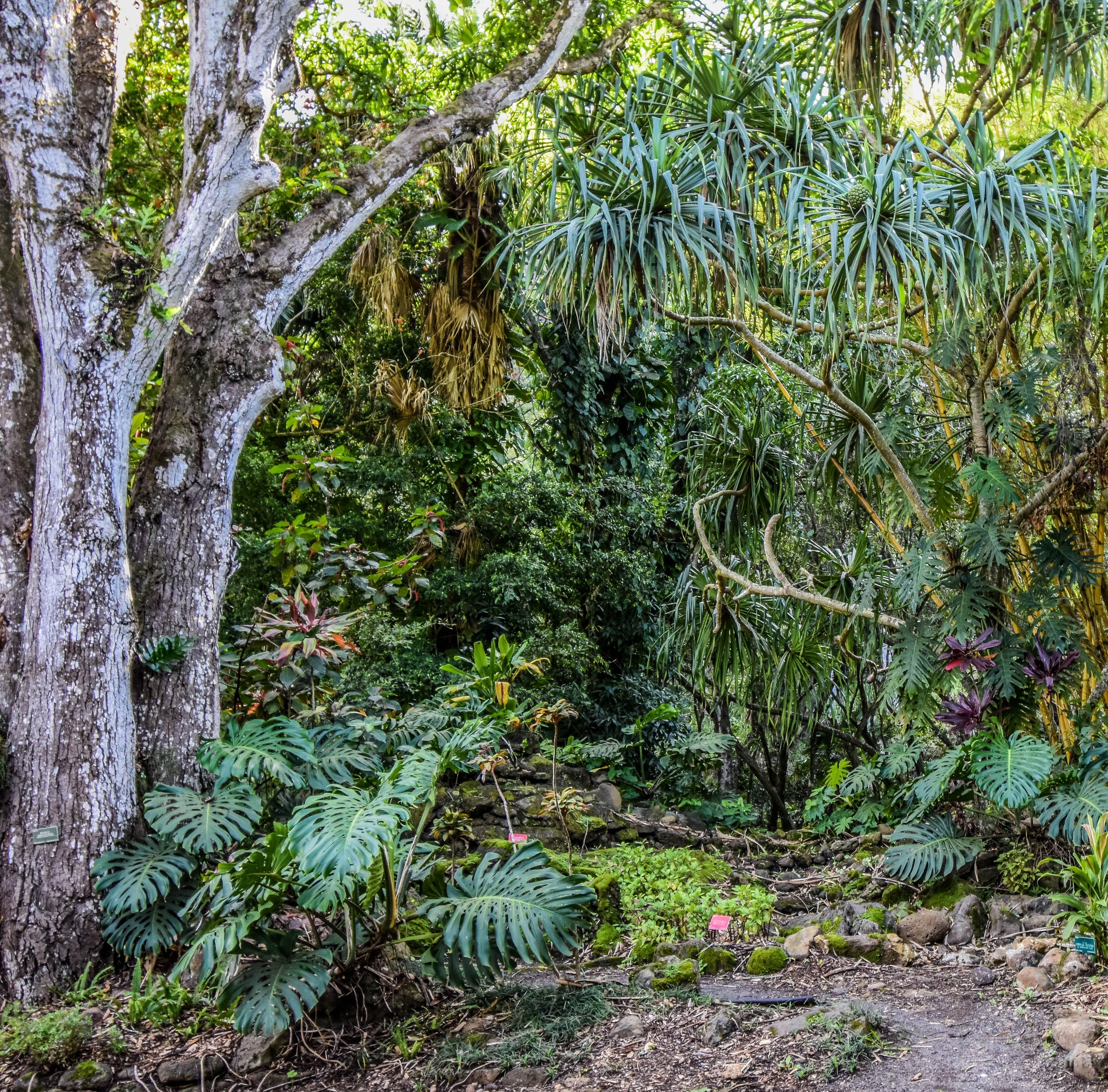 Gratis arkivbilde med bregne, grønn, hawaii, hawaiian