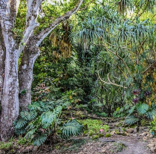 Fotos de stock gratuitas de árbol, camino, camino de la jungla, camino forestal