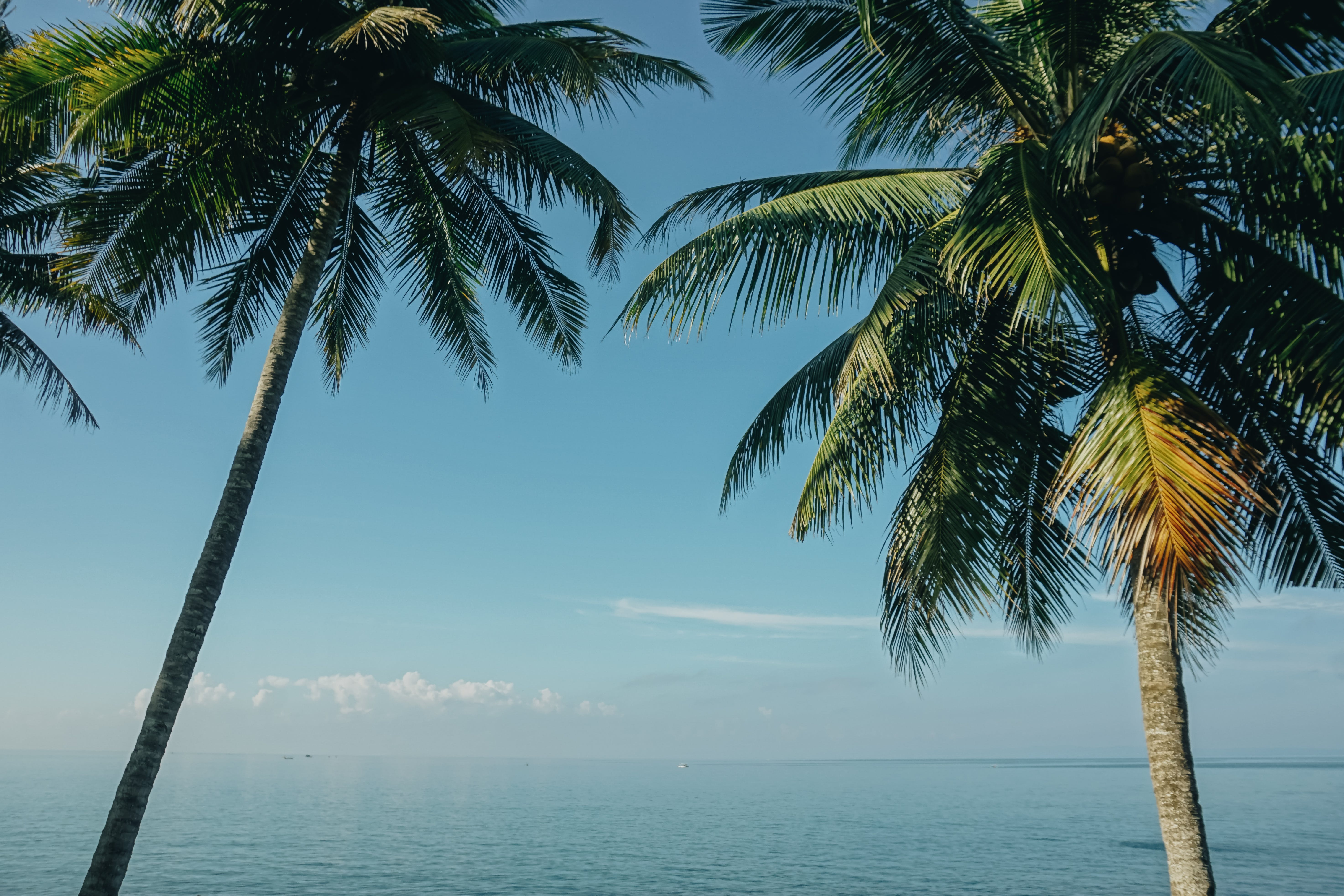 Two Coconut Trees Near Sea