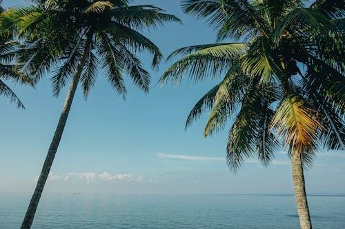Two Coconut Trees Near Sea