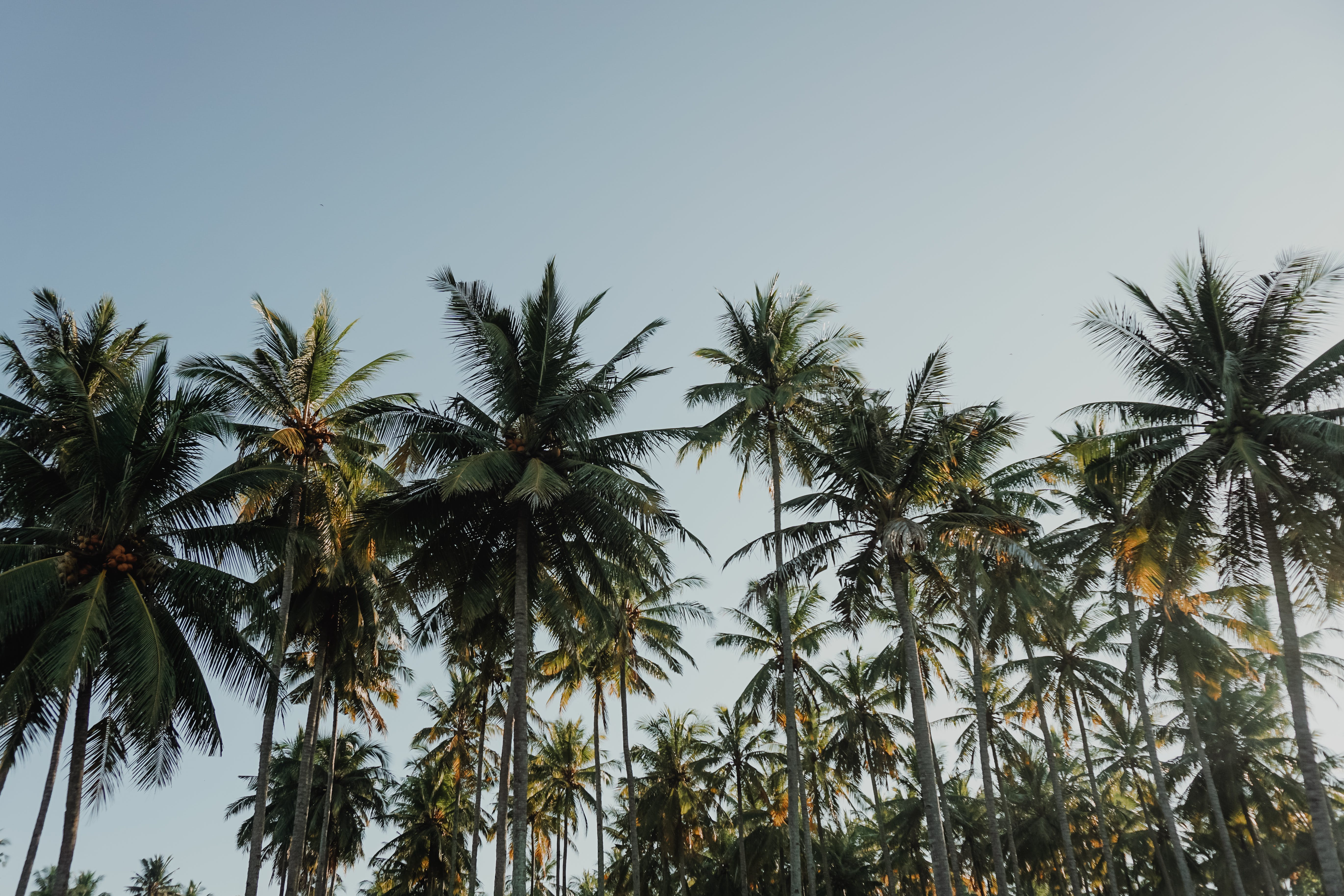 Coconut Trees Under Blue Sky at Daytime