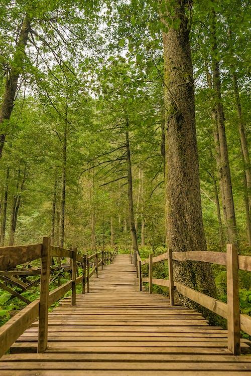 Foto d'estoc gratuïta de arbres, bosc, boscos