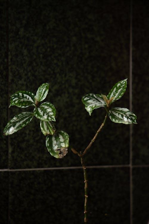 Základová fotografie zdarma na téma břečťan, déšť, dřevo
