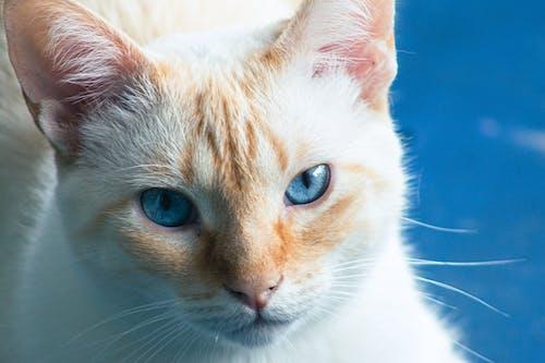 Základová fotografie zdarma na téma detailní záběr, domácí, domácí mazlíček