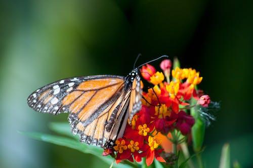 꽃에 앉은 나비의 무료 스톡 사진