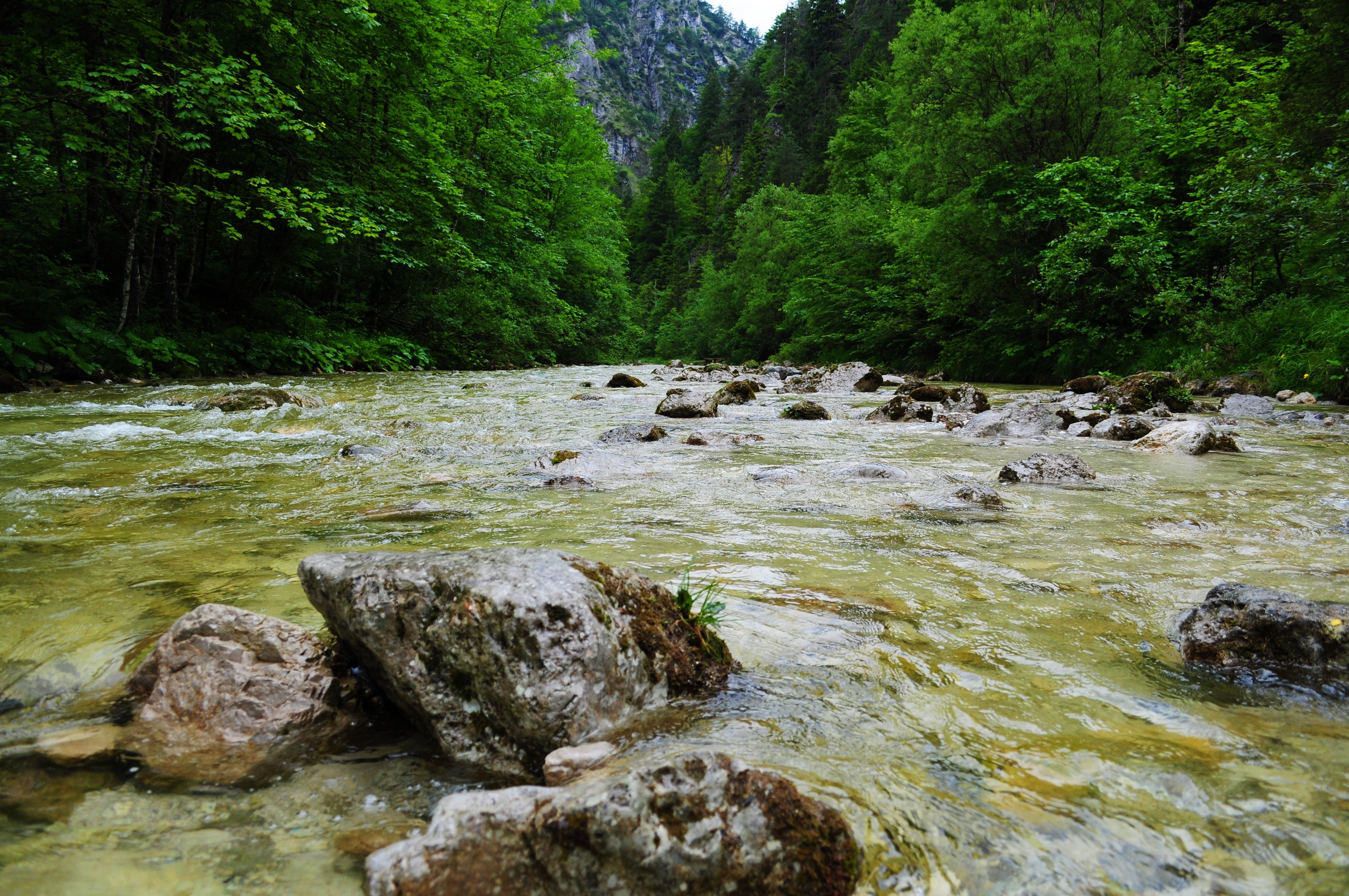 River Between Mountain Surrounded by Green Leaf Trees