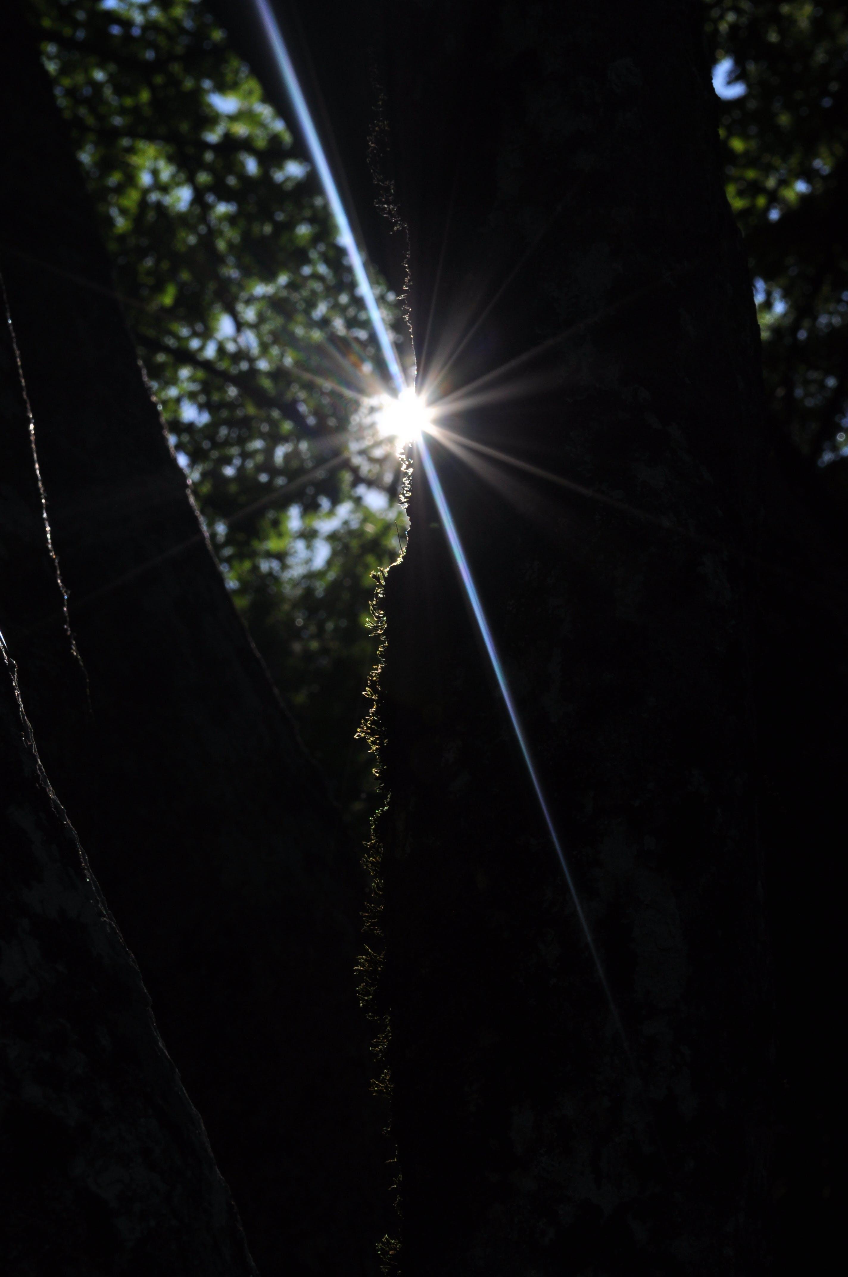 Ảnh lưu trữ miễn phí về ánh sáng mặt trời, tia nắng