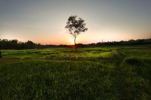 Immagine gratuita di sera, sunsen