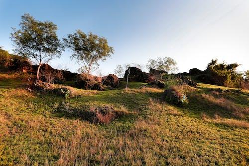 Immagine gratuita di alberi, cielo, collina, erba