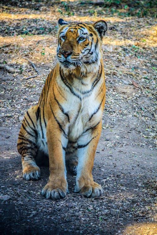 ハンター, 動物の写真, 哺乳類の無料の写真素材