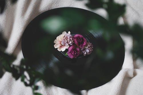 Бесплатное стоковое фото с диск, записывать, звукозапись, искусственные цветы