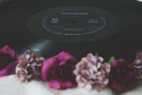Безкоштовне стокове фото на тему «запис, квіти, квітка, квітучий»