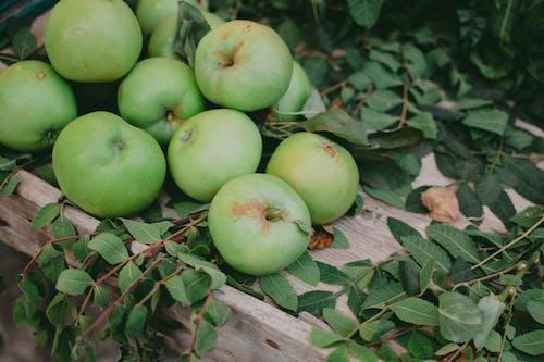 Foto stok gratis agrikultura, apel, apple
