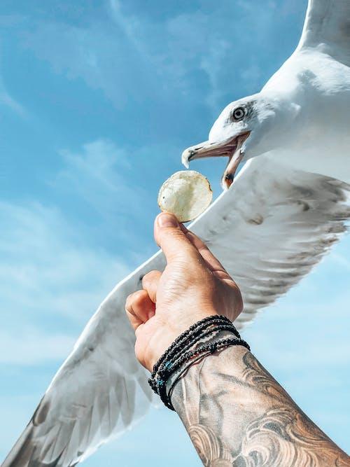 Foto d'estoc gratuïta de ales, au aquàtica, aviari