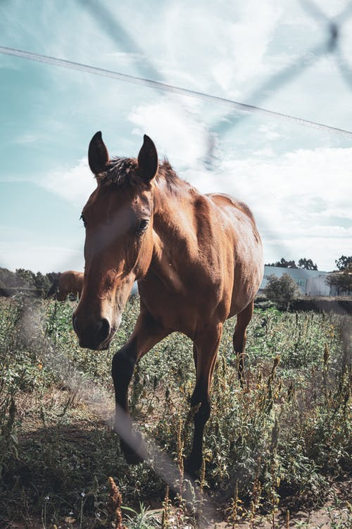 Free stock photo of brown horse, horse, horse farm
