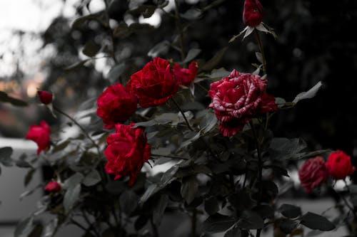 Fotos de stock gratuitas de amor, arbusto, Boda