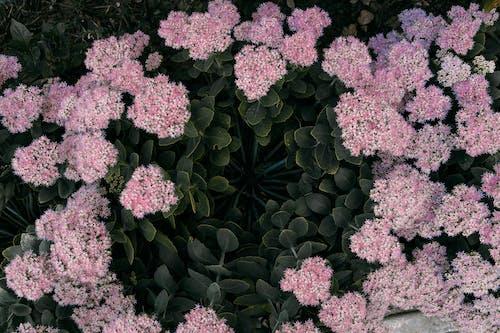 Fotos de stock gratuitas de árbol, arbusto, botánico