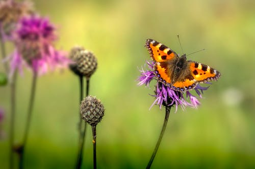 Fotos de stock gratuitas de abeja, al aire libre, alas de mariposa
