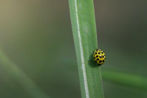 Fotos de stock gratuitas de al aire libre, animal, Beetle