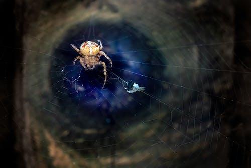 Fotos de stock gratuitas de animales en la naturaleza, arácnido, araña