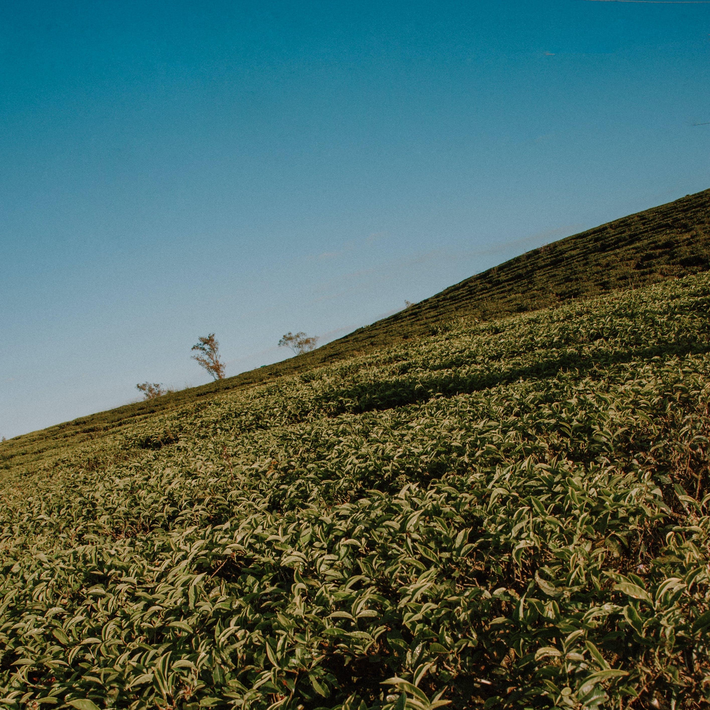 Kostenloses Stock Foto zu landschaft, natur, himmel, feld