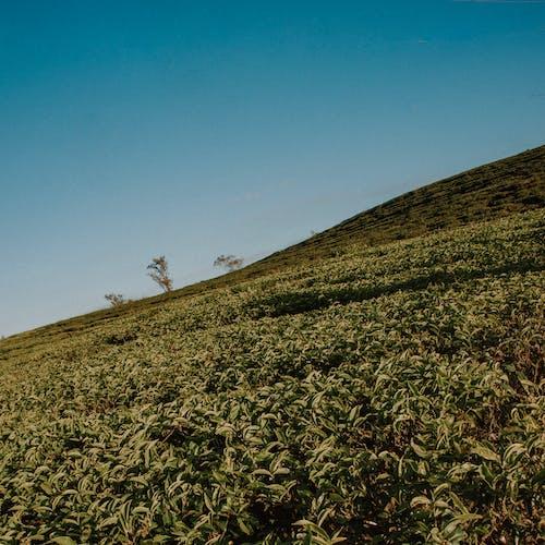 Gratis lagerfoto af afgrøder, agerjord, bakke, bane